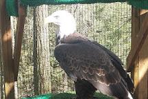 Cascades Raptor Center, Eugene, United States