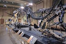 Dinosaur Discovery Museum, Kenosha, United States