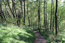 Great Wood, Keswick, United Kingdom