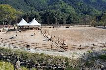 Alpaca World, Hongcheon-gun, South Korea