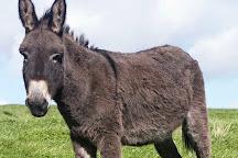 The Scottish Borders Donkey Sanctuary, Newtown St Boswells, United Kingdom
