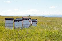 Chinook Honey Company, Okotoks, Canada