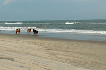 Corolla Wild Horse Tours, Corolla, United States