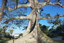 Giant Kapok Tree, Palm Beach, United States