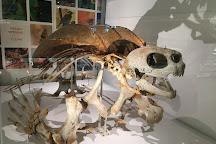 University Museum of Zoology, Cambridge, United Kingdom