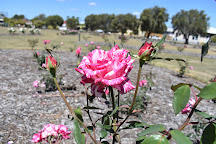 Elizabeth Park Rose Gardens, Maryborough, Australia