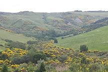 Cipressi di San Quirico d'Orcia, San Quirico d'Orcia, Italy
