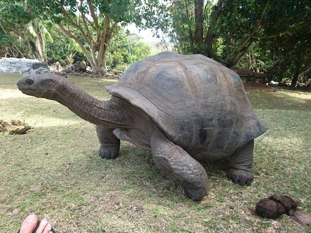 Ferme de tortues géantes