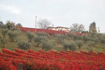 Azienda Agraria Brunozzi, Montefalco, Italy