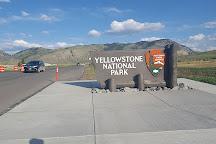 Yellowstone Wolf Tracker, Gardiner, United States