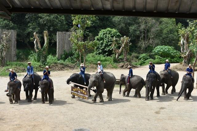 Maetaeng Elephant Park & Clinic
