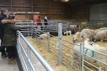 Mead Open Farm, Billington, United Kingdom