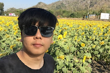 Sunflower Field, Phatthana Nikhom, Thailand