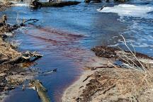 Great Dismal Swamp National Wildlife Refuge, Suffolk, United States