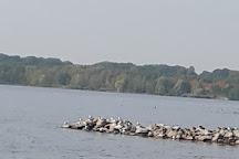 Cospudener See, Leipzig, Germany