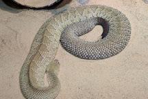 Cape Fear Serpentarium, Wilmington, United States