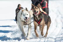Snow Forest Adventures, Algonquin Provincial Park, Canada