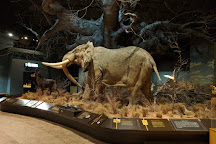 Anniston Museum of Natural History, Anniston, United States