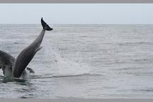SeaMor Dolphin Watching Boat Trips, New Quay, United Kingdom