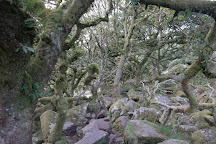 Wistman's Wood, Dartmoor National Park, United Kingdom