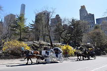 Central Park Carriage Company, New York City, United States