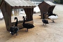 Swan Lake Iris Gardens, Sumter, United States