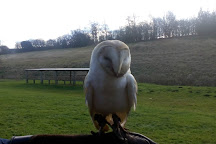 Simon Tebbutt Falconry, Oakham, United Kingdom