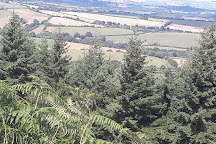 Haldon Forest Park (Forestry England), Exeter, United Kingdom