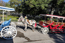 Royal Carriages, New Orleans, United States
