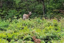 Big Pocono State Park, Tannersville, United States
