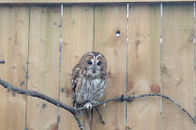 Scottish Owl Centre, Whitburn, United Kingdom