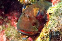 Dive Center Punta Amanay, Corralejo, Spain