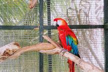 Barbados Wildlife Reserve, Saint Peter Parish, Barbados