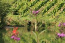 MountainRose Vineyards, Wise, United States