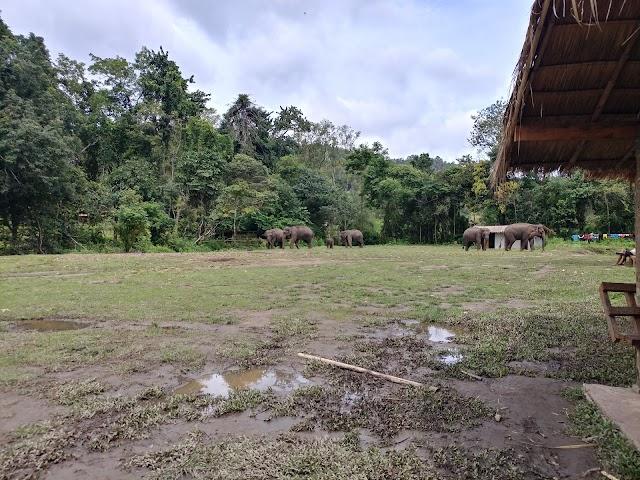Elephant Dream Valley