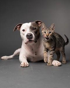 AGoldPhoto Pet Photography Studio