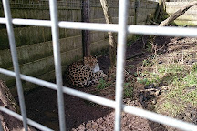 Cat Survival Trust, Welwyn, United Kingdom