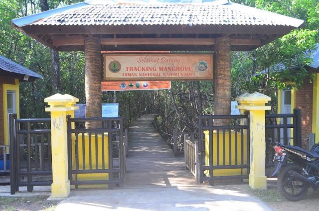 Mangrove Area Tourism