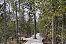 The Ridges Sanctuary, Baileys Harbor, United States