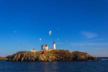 New England EcoAdventures, Kennebunk, United States