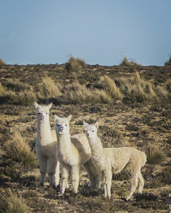 Colca Peru Tours 7