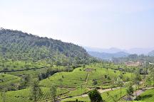 Amazing Munnar Tours, Munnar, India