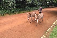Uganda Wildlife Conservation Education Centre, Entebbe, Uganda