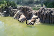 Franklin Park Zoo, Boston, United States