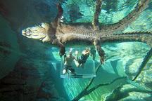 Crocosaurus Cove, Darwin, Australia