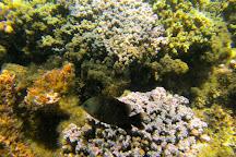 Palolo Deep Marine Reserve, Apia, Samoa