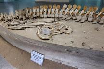 Museum of Natural History, Luanda, Angola