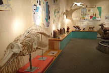 Natural History Museum and Institute, Chiba, Japan