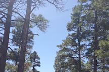 Ashurst Lake, Flagstaff, United States