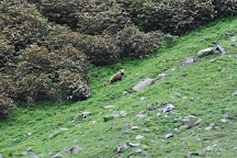 Kugti Wildlife Sanctuary, Bharmour, India